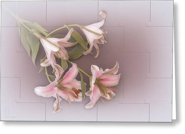 Lily Greeting Card by Elaine Teague
