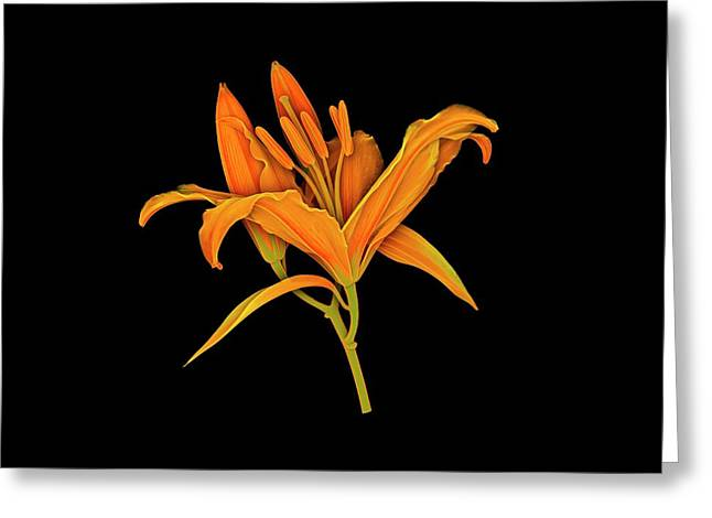 Lily Flower Greeting Card by Dan Sykes/natural History Museum, London