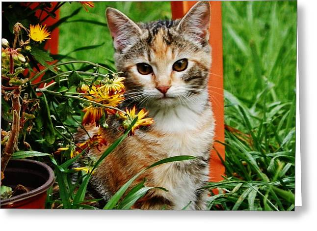 Greeting Card featuring the photograph Lily Garden Cat by VLee Watson