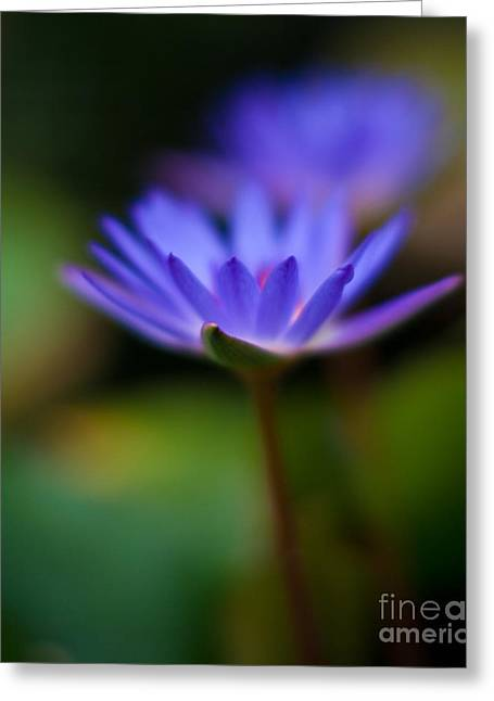 Lily Glow Greeting Card by Mike Reid