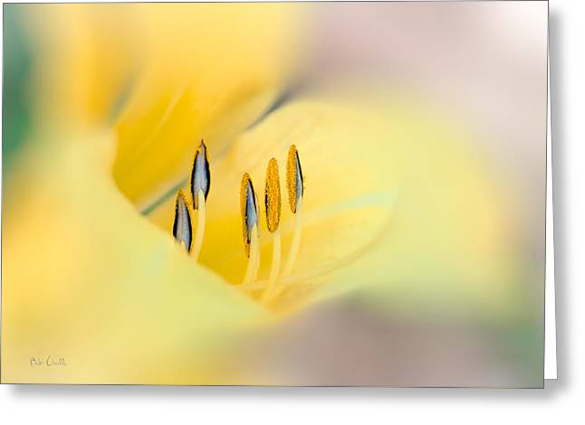 Lily Impressions Greeting Card by Bob Orsillo