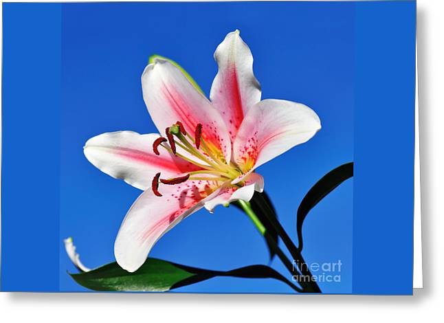 Lily In The Sky Greeting Card