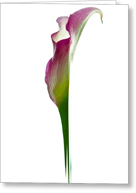 Lily Greeting Card by Jonathan Nguyen