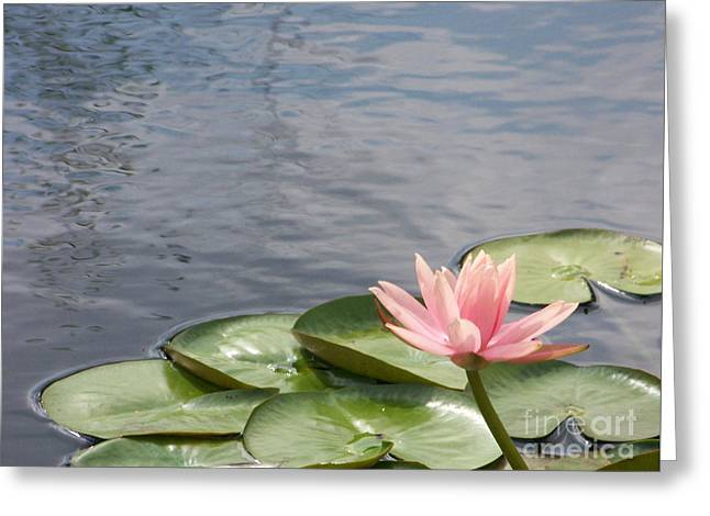 Lily Greeting Card by Kevin Croitz