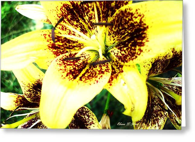 Greeting Card featuring the photograph Lily Love by Shana Rowe Jackson