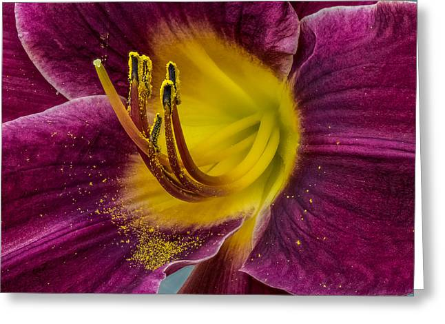 Lily Macro Greeting Card by Paul Freidlund