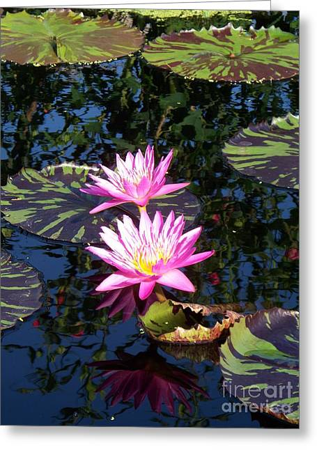 Lily Monet Greeting Card by Eric  Schiabor