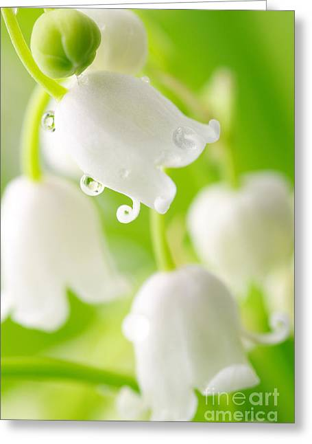 Lily Of The Valley Greeting Card by Boon Mee