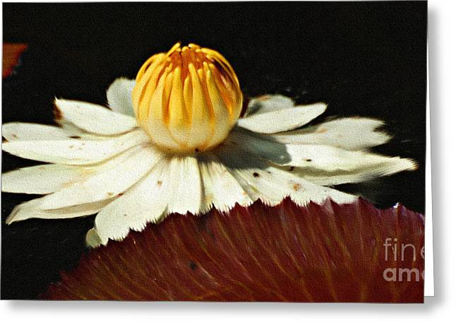 Lily Pad Greeting Card by Diane E Berry