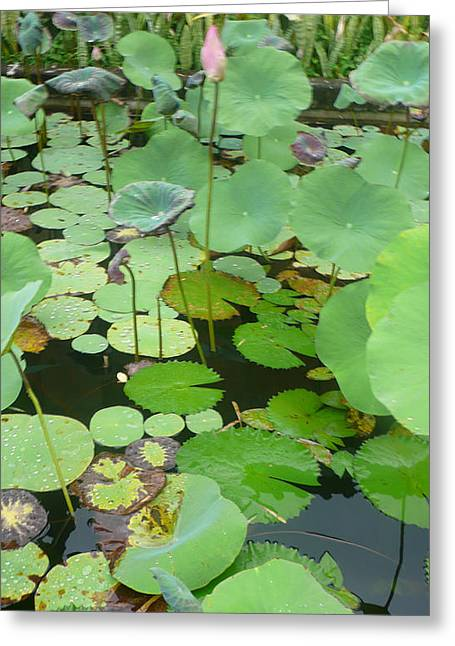 Lily Pad Greeting Card by Jack Edson Adams