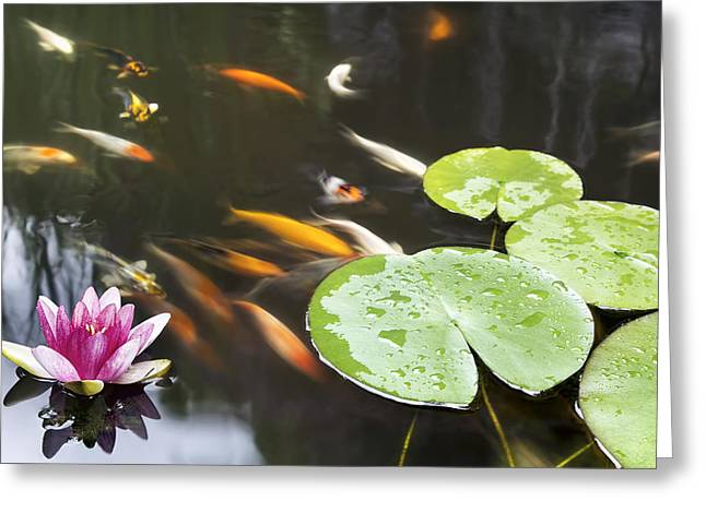 Lily Pad Pink Flower In Koi Pond Greeting Card