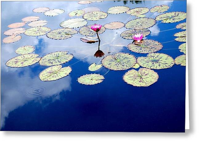 Lily Pads -  A Floating World Greeting Card