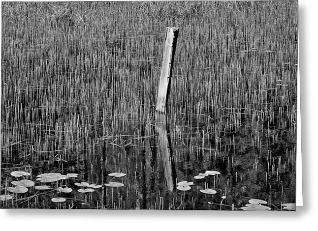 Lily Pads And Reeds Greeting Card by Allan Van Gasbeck