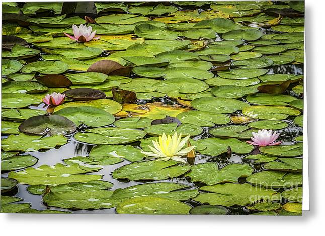 Lily Pads II Greeting Card