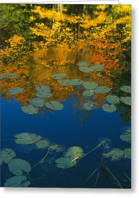Lily Pads In Autumn Greeting Card