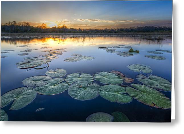 Lily Pads In The Glades Greeting Card by Debra and Dave Vanderlaan