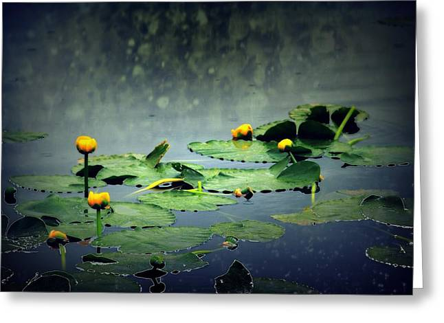 Lily Pads In The Rain At Vernonia Lake Greeting Card by Dawna Morton