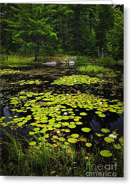 Lily Pads On Lake Greeting Card by Elena Elisseeva