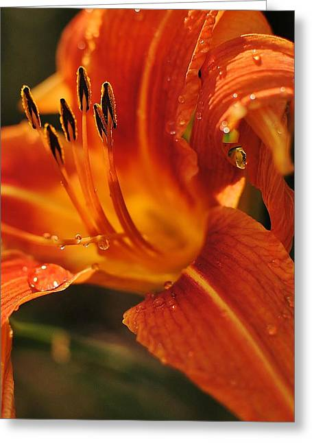 Greeting Card featuring the photograph Lily by Paul Noble
