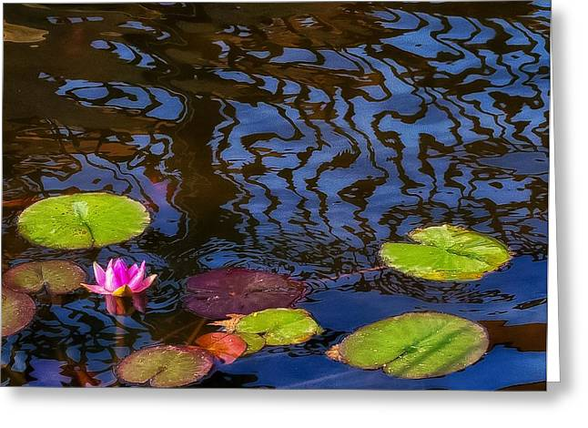 Lily Pond Abstract A Study In Patterns Greeting Card
