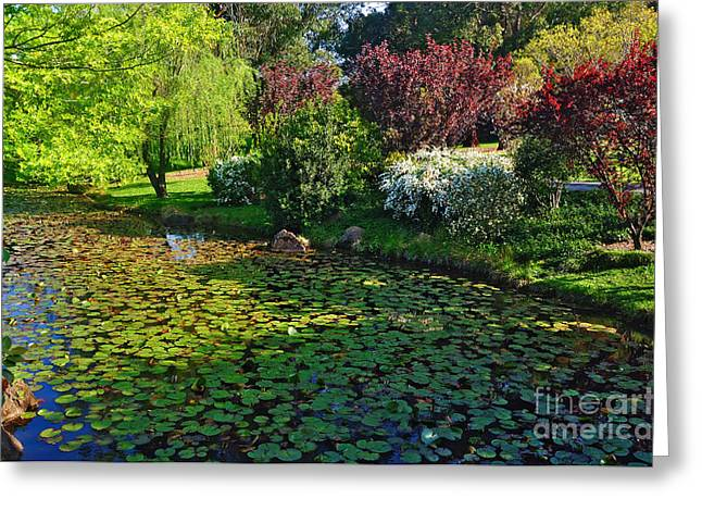 Lily Pond And Colorful Gardens Greeting Card by Kaye Menner