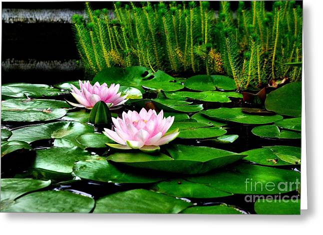 Greeting Card featuring the photograph Lily Pond by John S