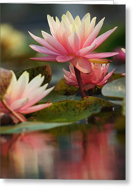 Lily Reflections 2 Greeting Card