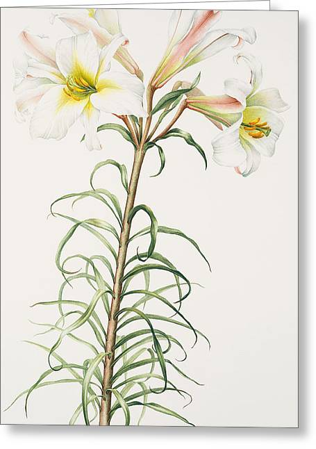 Lily Regale Greeting Card