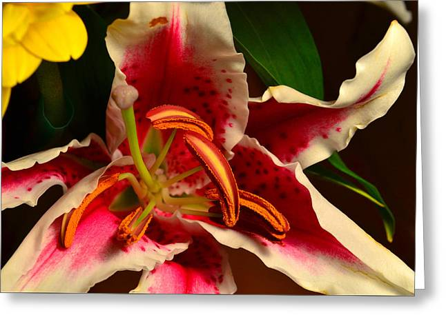 Lily Rose Flower 2 Greeting Card