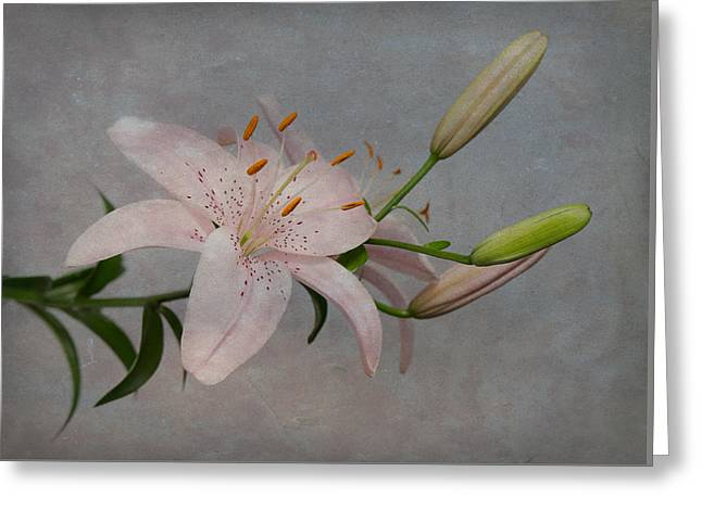 Greeting Card featuring the photograph Pink Lily With Texture by Patti Deters