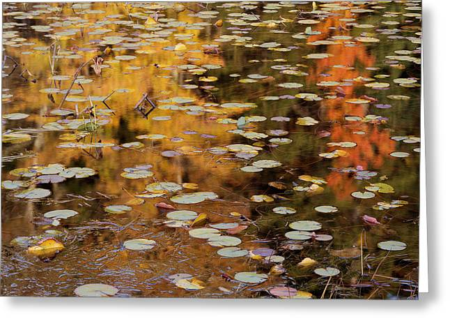 Lilypads And Reflection-h Greeting Card