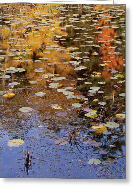 Lilypads And Reflection Greeting Card
