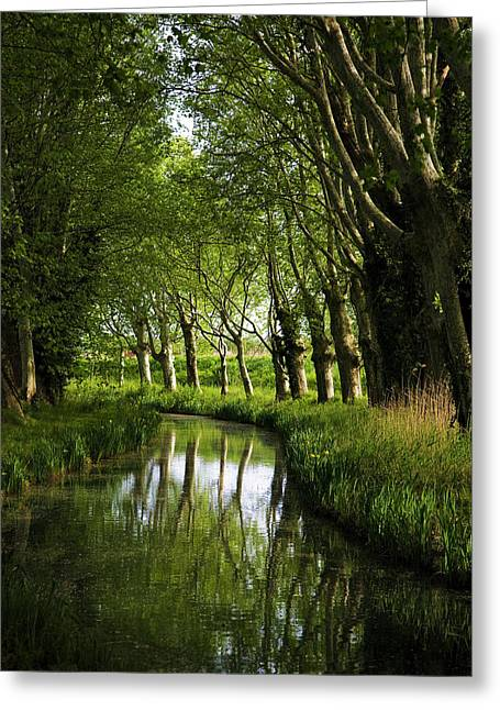 Lime Trees On Feeder To Canal Du Midi Greeting Card