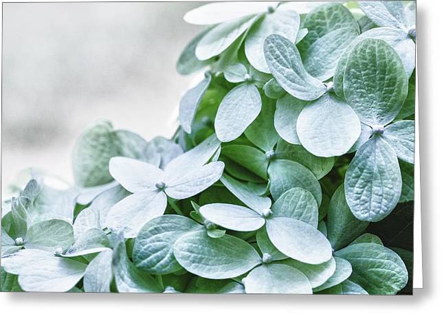 Greeting Card featuring the photograph Limelight Hydrangea by Cathy Donohoue