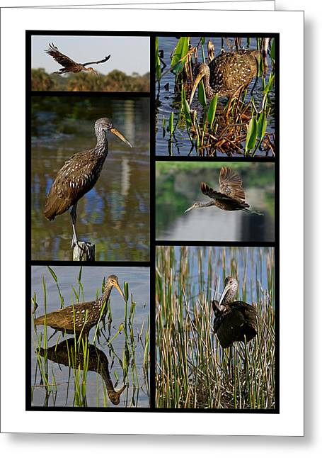 Limpkin Collage Greeting Card by Dawn Currie