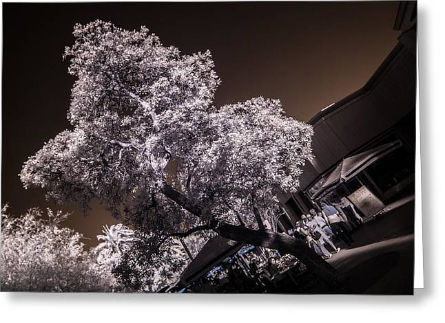 Lincoln Road Tree Greeting Card