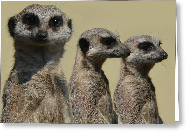 Line Dancing Meerkats Greeting Card
