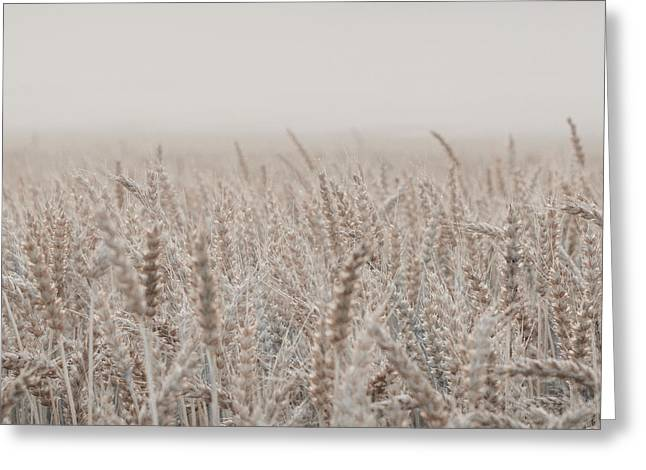 Misty Morning Over Cornfield Greeting Card
