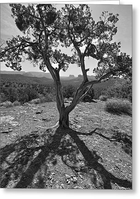 Greeting Card featuring the photograph Lines In Two Light by James Steele