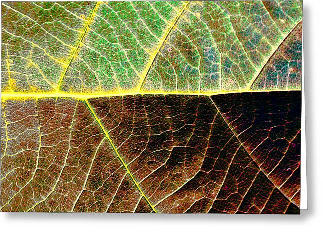 Lines Of Life Greeting Card by Dave Bosse