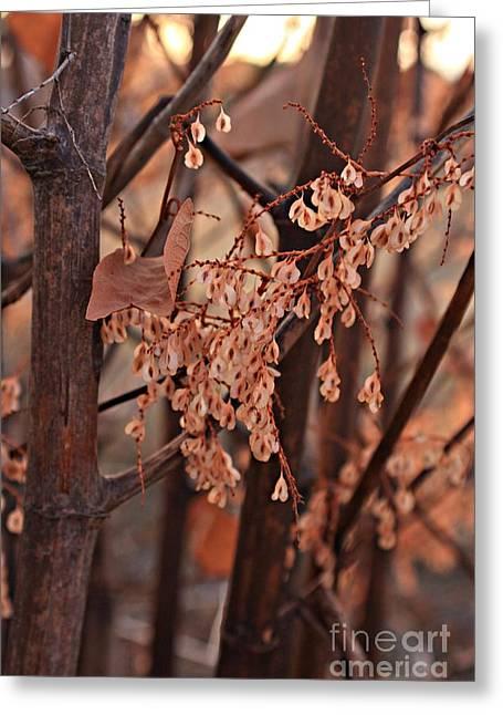 Lingering Seeds Greeting Card by Marcia Lee Jones
