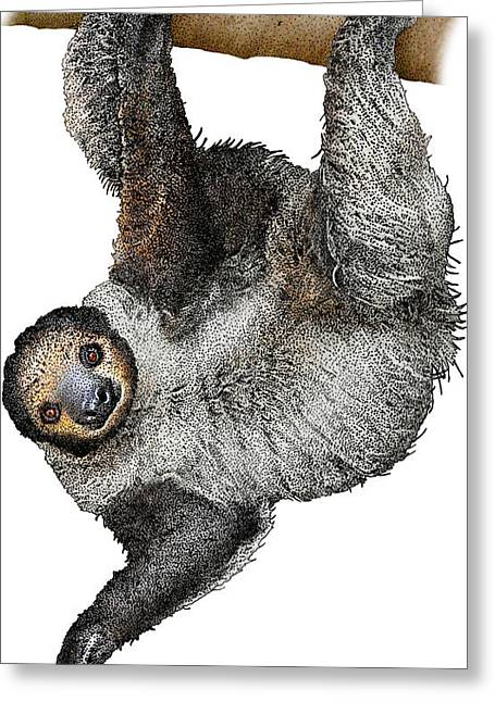 Linnaeuss Two-toed Sloth, Illustration Greeting Card by Roger Hall