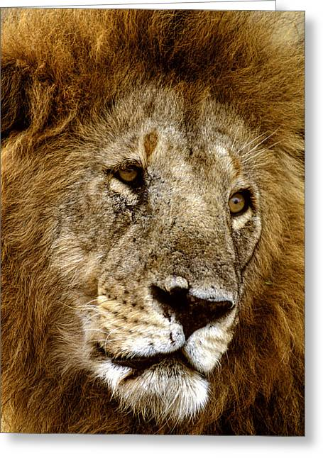 Lion 01 Greeting Card by Wally Hampton