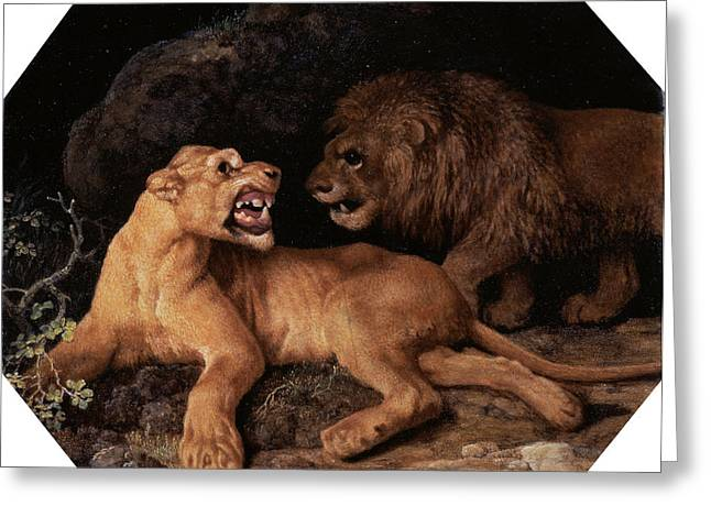 Lion And Lioness Signed And Dated, White Greeting Card