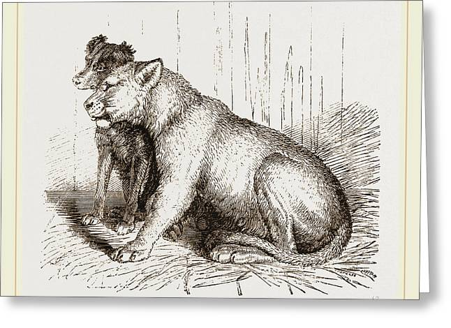 Lion And Spaniel Greeting Card