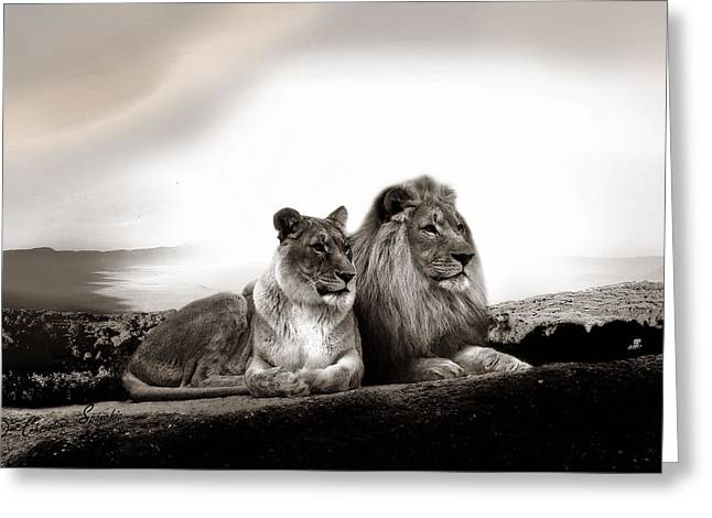 Lion Couple In Sunset Greeting Card