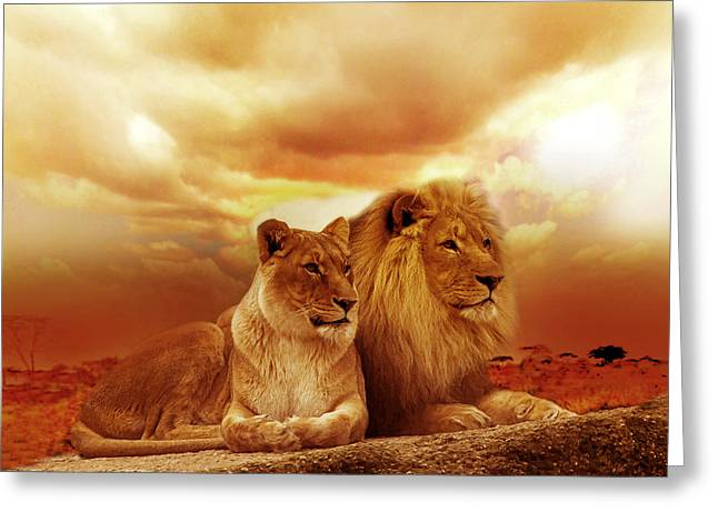 Lion Couple Without Frame Greeting Card