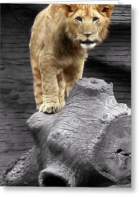 Greeting Card featuring the photograph Lion Cub by Cathy Harper