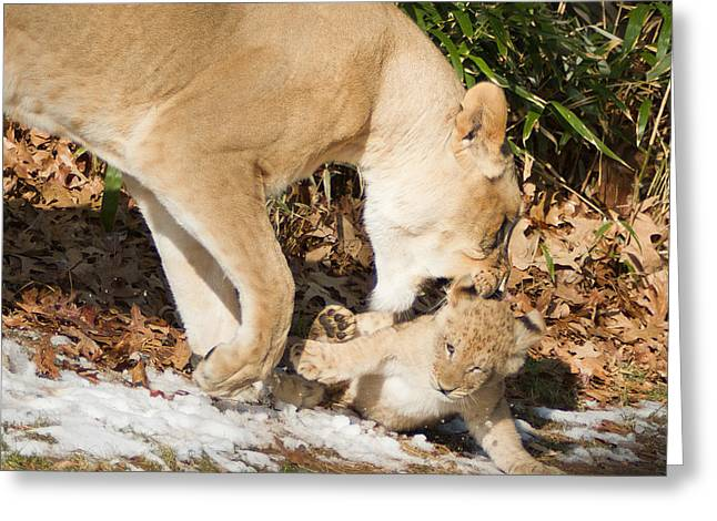 Lion Cub With Mom Greeting Card