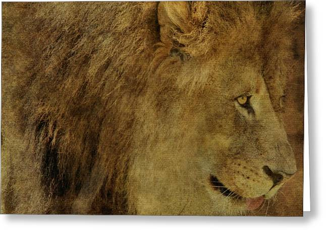 Lion Greeting Card by Dan Sproul